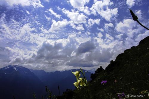 Цветы Шхуанты