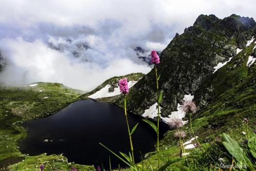 Цветы у озер Загедана